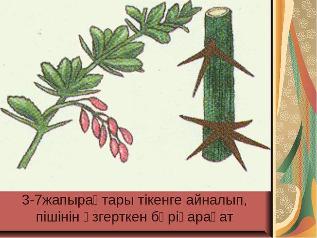 3-7жапырақтары тікенге айналып, пішінін өзгерткен бөріқарақат