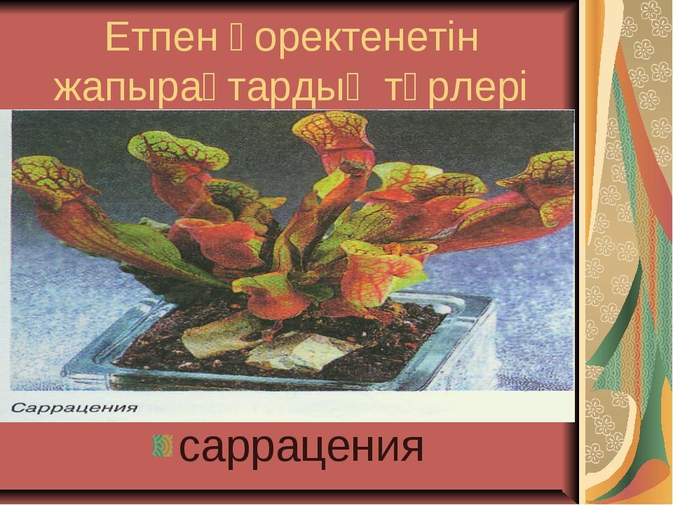 Етпен қоректенетін жапырақтардың түрлері саррацения