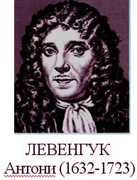 http://900igr.net/datai/biologija/ZHivye-kletki/0004-004-Iz-istorii-kletochnoj-teorii.png