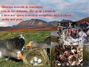 Птицы выводили птенцов, учили их летать. На зиму улетали в теплые края, а вес