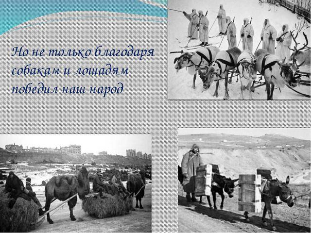 Но не только благодаря собакам и лошадям победил наш народ