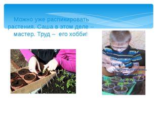 Можно уже распикировать растения. Саша в этом деле – мастер. Труд – его хобби!