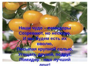 Наши чудо – помидоры Созревают, но нескоро. И мы будем есть их вволю, Посыпая
