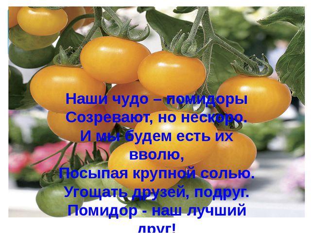 Наши чудо – помидоры Созревают, но нескоро. И мы будем есть их вволю, Посыпая...