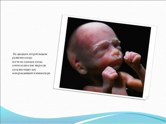 На двадцать второй неделе развития плода: ногти на пальцах плода почти полно...