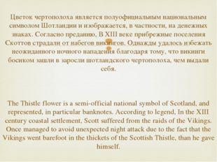 Цветок чертополоха является полуофициальным национальным символом Шотландии и