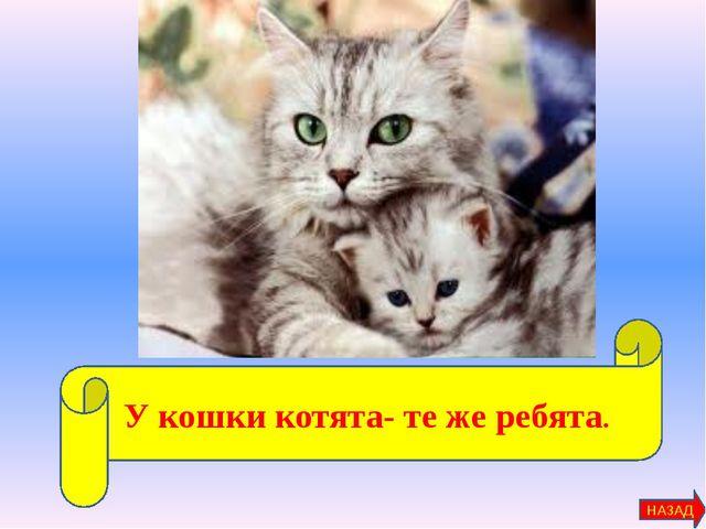 У кошки котята- те же ребята. НАЗАД