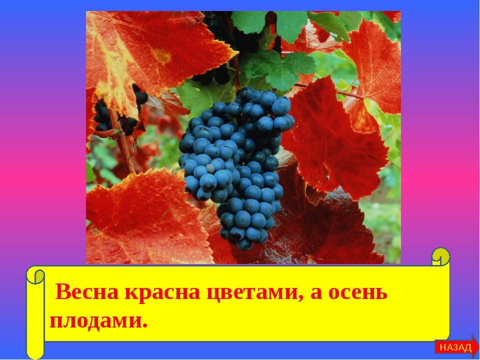 Весна красна цветами, а осень плодами. НАЗАД