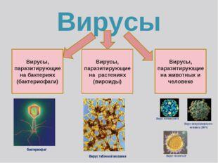 Вирусы Вирусы, паразитирующие на бактериях (бактериофаги) Вирусы, паразитирую