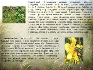 Мия-бұршақ тұқымдасына жататын көпжылдық шөптесін өсімдіктер. Қазақстанның шө