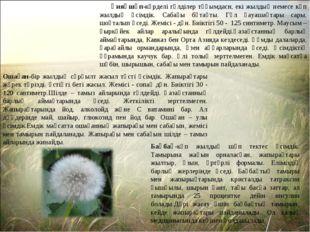 Қияқшөп-күрделі гүлділер тұқымдасн, екі жылдық немесе көп жылдық өсімдік. Са