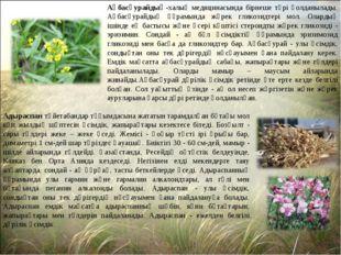 Ақбасқурайдың-халық медицинасында бірнеше түрі қолданылады. Ақбасқурайдың құр