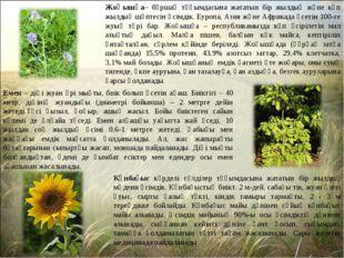 Жоңышқа– бұршақ тұқымдасына жататын бір жылдық және көп жылдық шөптесін өсімд