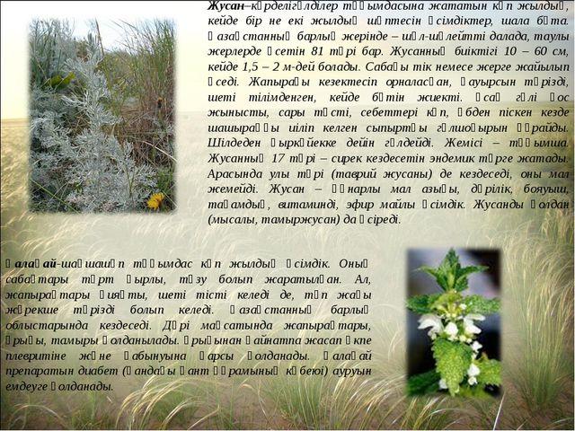 Жусан–күрделігүлділер тұқымдасына жататын көп жылдық, кейде бір не екі жылдық...
