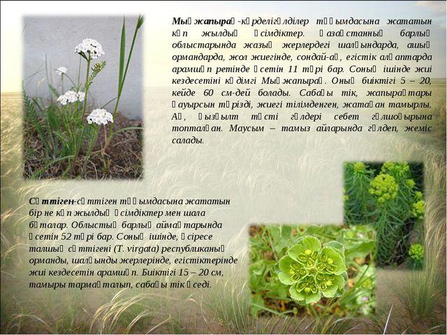 Мыңжапырақ-күрделігүлділер тұқымдасына жататын көп жылдық өсімдіктер. Қазақст...