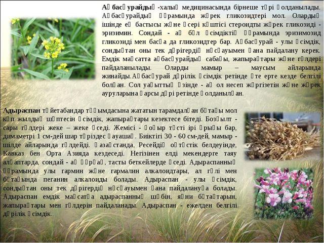 Ақбасқурайдың-халық медицинасында бірнеше түрі қолданылады. Ақбасқурайдың құр...