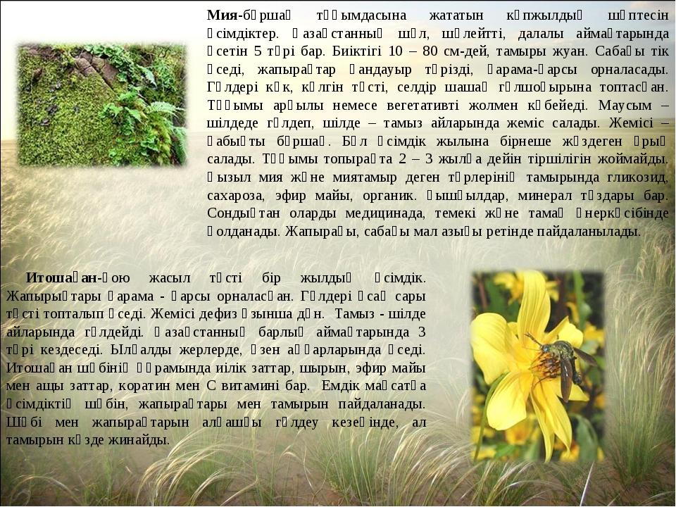 Мия-бұршақ тұқымдасына жататын көпжылдық шөптесін өсімдіктер. Қазақстанның шө...