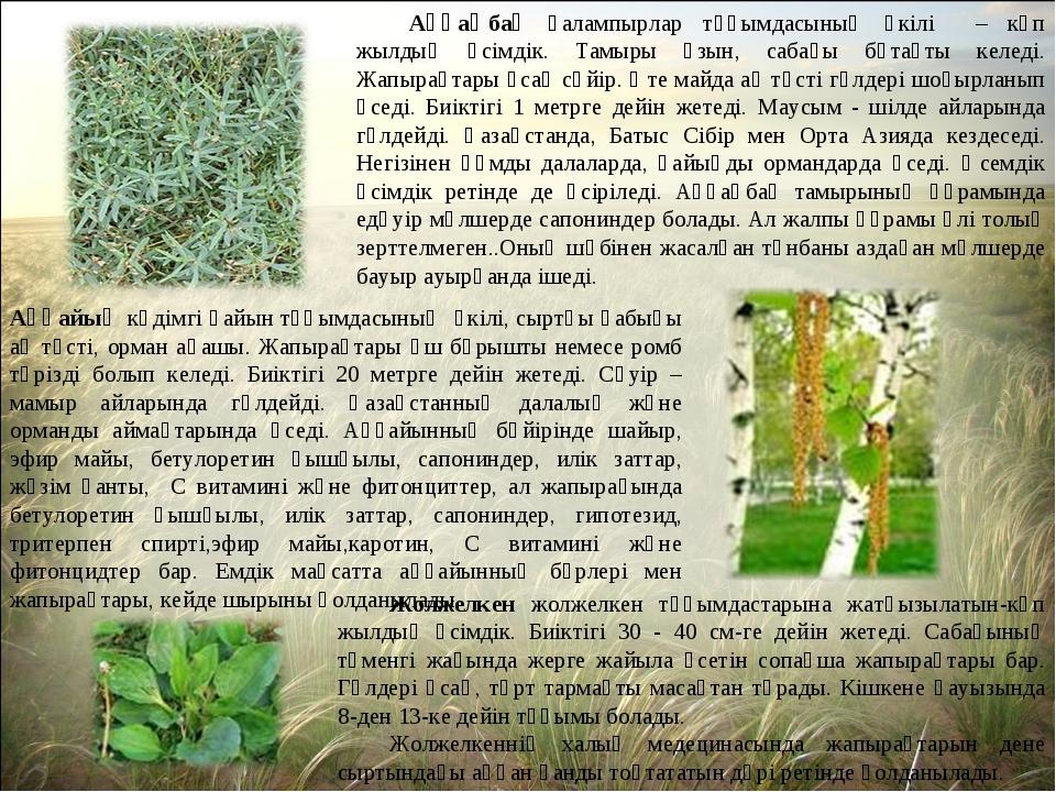 Аққаңбақ қалампырлар тұқымдасының өкілі – көп жылдық өсімдік. Тамыры ұзын, са...