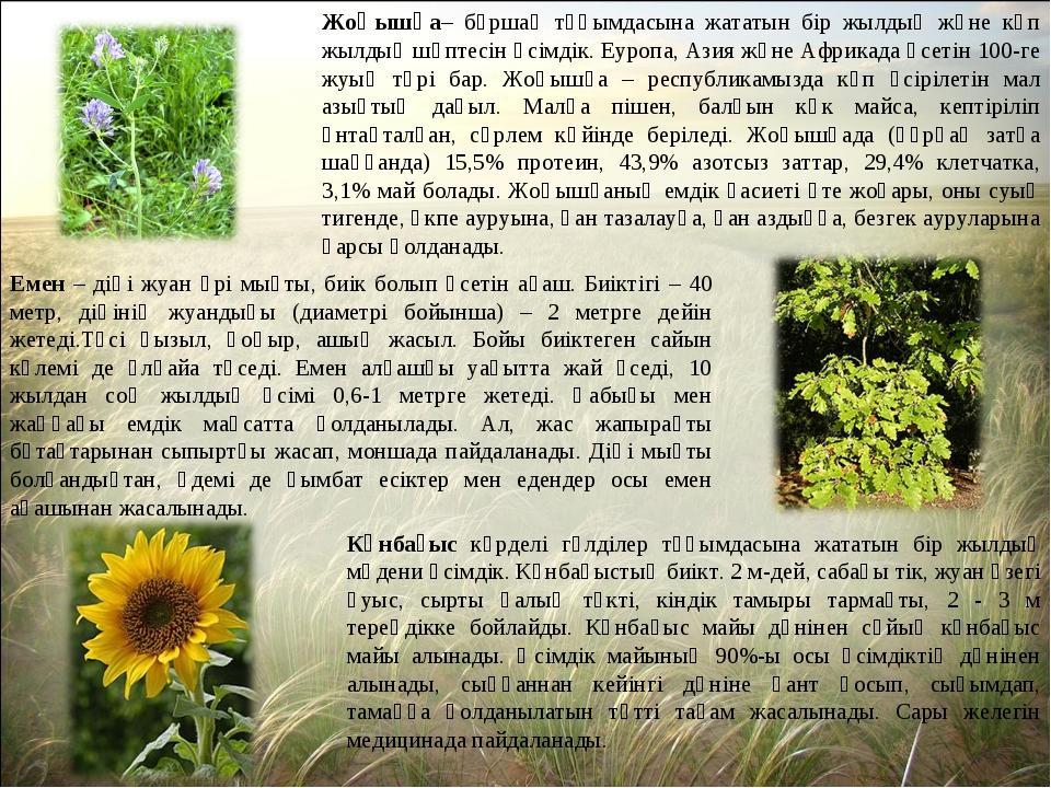 Жоңышқа– бұршақ тұқымдасына жататын бір жылдық және көп жылдық шөптесін өсімд...