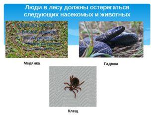 Люди в лесу должны остерегаться следующих насекомых и животных Медянка Клещ Г