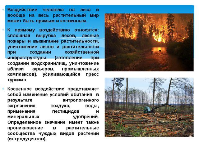 Воздействие человека на леса и вообще на весь растительный мир может быть пря...