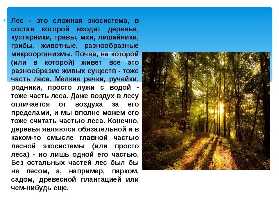 Лес - это сложная экосистема, в состав которой входят деревья, кустарники, тр...