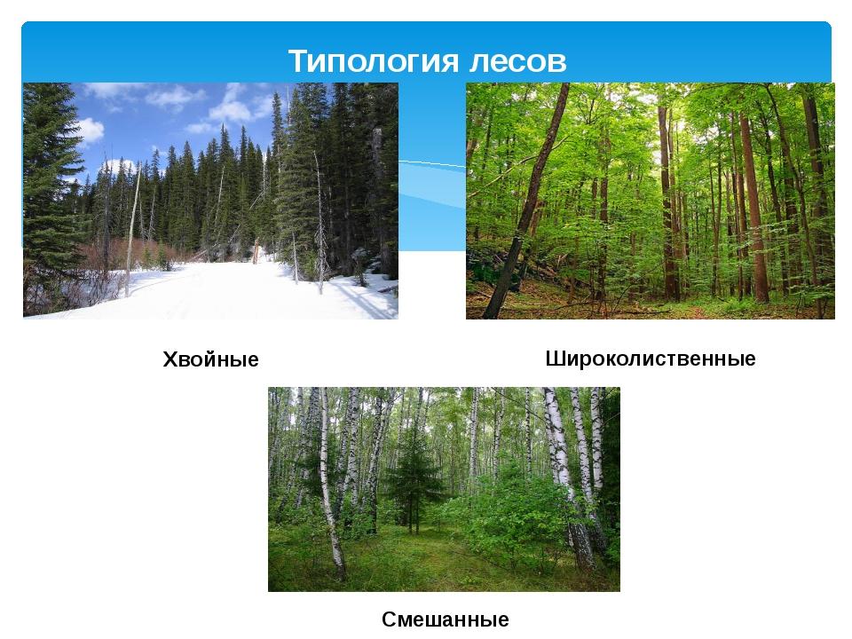 Типология лесов Хвойные Широколиственные Смешанные