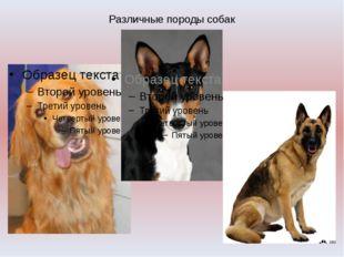 Различные породы собак
