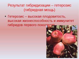Результат гибридизации – гетерозис (гибридная мощь) Гетерозис – высокая плодо
