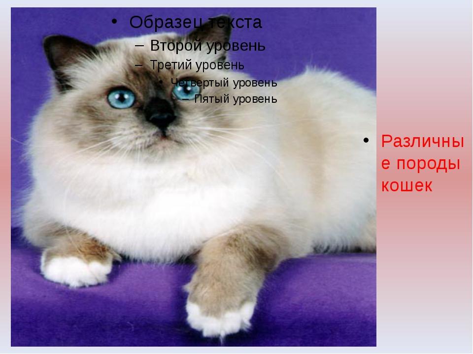 Различные породы кошек