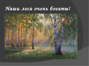 Наши леса очень богаты!