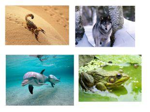 Звери, птицы, насекомые, рыбы живут в разной природной среде: в лесах, на бол