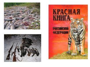 В погоне за пушистым и мягким мехом охотники порой бесконтрольно истребляют л