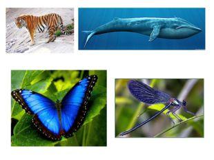 На уроках по предмету «Окружающий мир» ты узнал о редких видах животных: амур