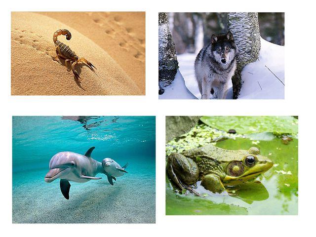 Звери, птицы, насекомые, рыбы живут в разной природной среде: в лесах, на бол...