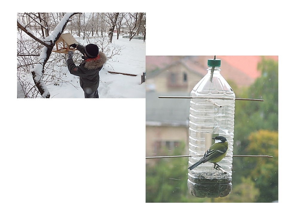 Как ты можешь помочь животным и птицам в зимнее время? Многие ребята мастерят...