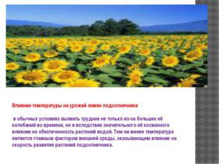 Влияние температуры на урожай семян подсолнечника в обычных условиях выявить