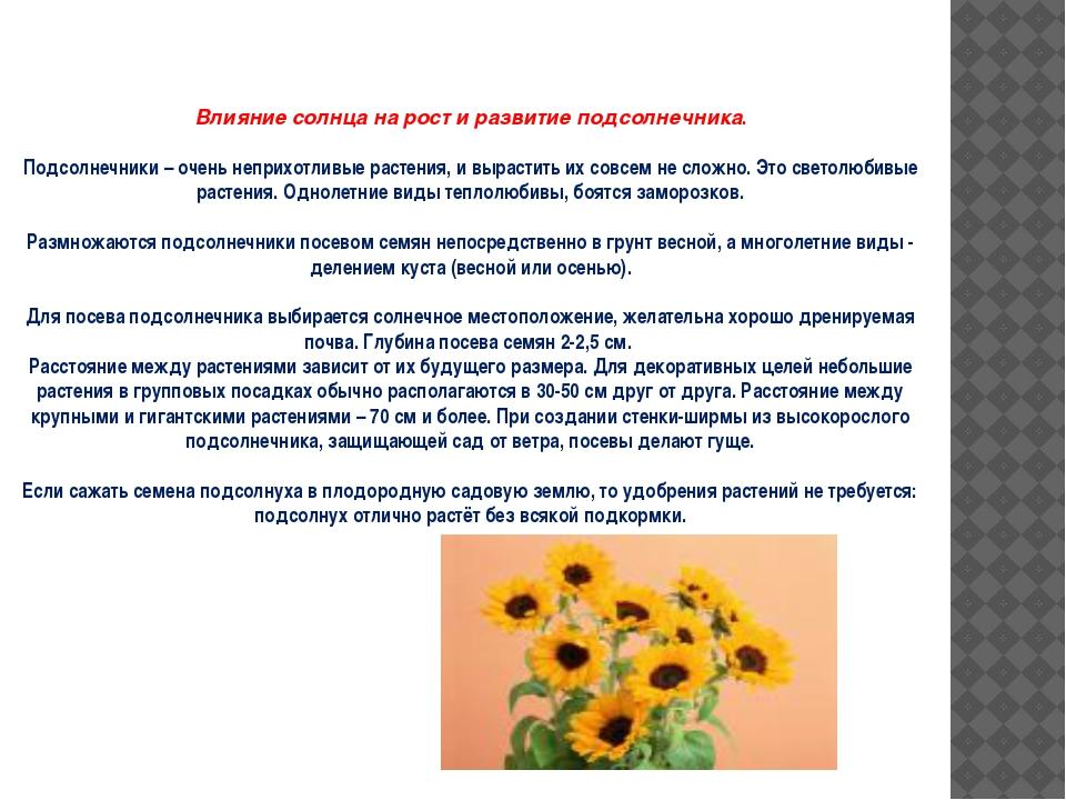 Влияние солнца на рост и развитие подсолнечника. Подсолнечники – очень непри...