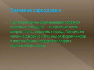 Значение саркодовых Пустые раковины фораминифер образуют огромные, толщиной