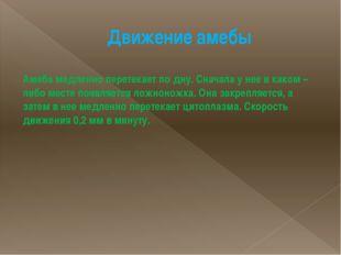 Движение амебы Амеба медленно перетекает по дну. Сначала у нее в каком – либо