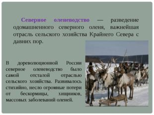 Северное оленеводство — разведение одомашненного северного оленя, важнейша