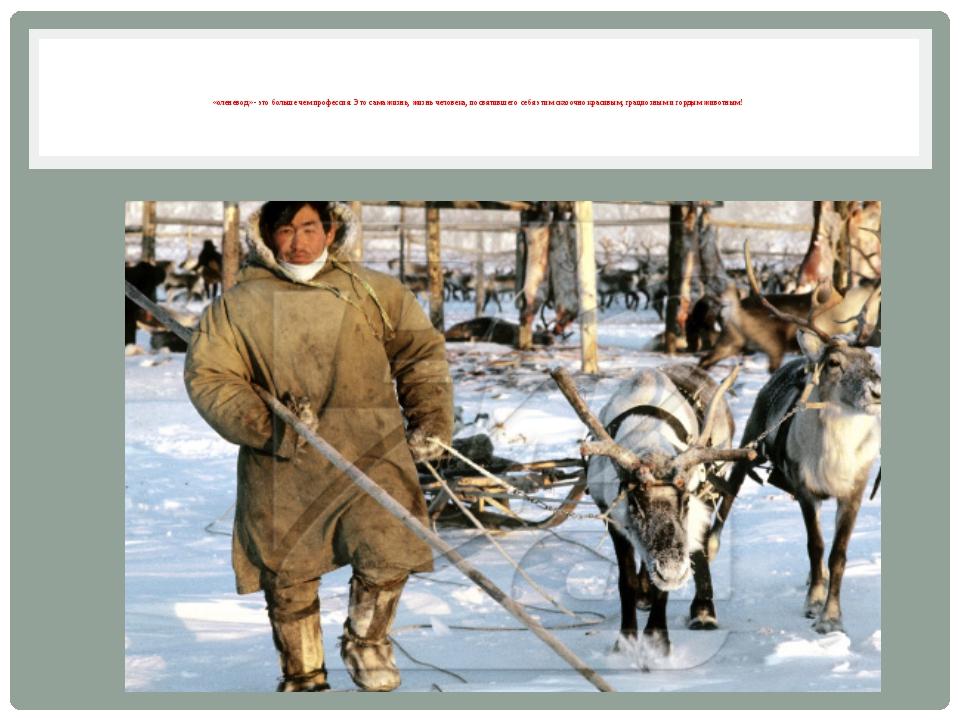 «оленевод» - это больше чем профессия. Это сама жизнь, жизнь человека, посвя...