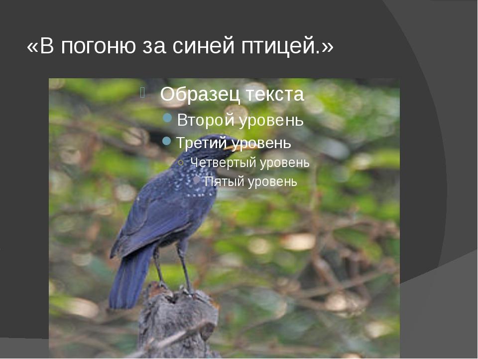 «В погоню за синей птицей.»