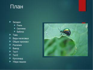 План Загадки Пчела Светлячок Бабочка Тема Виды насекомых Общие признаки Разли