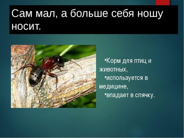 Сам мал, а больше себя ношу носит. Корм для птиц и животных, используется в м...