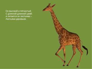 Он высокий и пятнистый, С длинной-длинной шеей. А питается он листьями – Лист