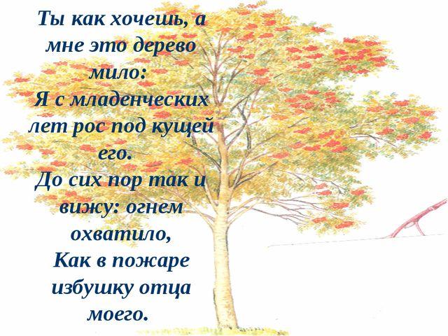 Ты как хочешь, а мне это дерево мило: Я с младенческих лет рос под кущей его....