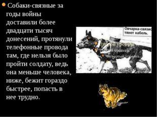 Собаки-связные за годы войны доставили более двадцати тысяч донесений, протя