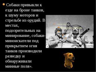 Собаки привыкли к езде на броне танков, к шуму моторов и стрельбе из орудий.