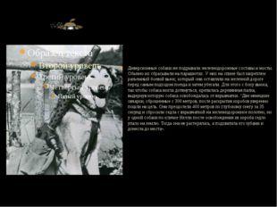 Диверсионные собаки же подрывали железнодорожные составы и мосты. Обычно их